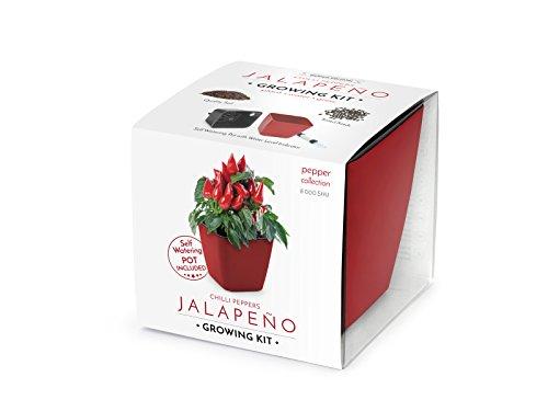 Domestico Jalapeño Anzuchtset, Chilli Pepper Growing Kit (Rot), All-In-One Set – Selbstbewässerungstopf 13x13 cm, Samen, frisches Substrat mit Nährstoffen