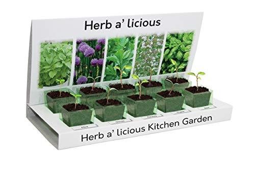 Seed Eco Gifts Herbs Herbs Herb-a-Licious Grow-Set, 100% recycelbar, 5 Sorten