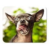 Mousepad Computadora Bloc de Notas Oficina Marrón Perro Chihuahua Amarillo Cachorro Feo Aspecto Adulto Montaña Hogar Escuela Juego Jugador Computadora
