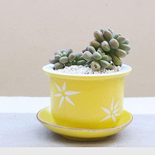 Vaso di Fiori, Vaso di Fiori Piccole Piante per piantare Piante in Vaso Seminatrice Decorazioni per la casa Micro Paesaggio Il miglior Regalo per parenti e Amici Ornamenti