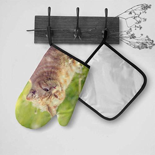Pinakoli Fancy Ofenhandschuhe Pusteblume Samen Katze Tier Küche Handschuhe für Ofenhandschuh und Topflappen Set wasserdicht hitzebeständig für BBQ, Kochen, Backen, Grillen, Grillen