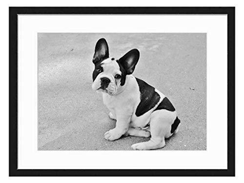 Wood Framed Canvas Artwork Home Decore Wall Art (Black White 20x14 inch) - French Bulldog Dog Puppy Pet Animals Bulldog Puff