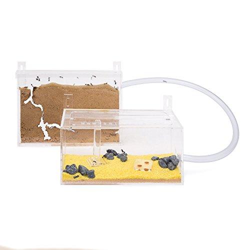 AntHouse - Natürliche Ameisenfarm aus Sand - Mini Acryl Wandset (Gratis Ameisen)
