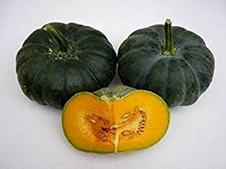 Pumpkin Seeds,(Jade Prince),West Indian Flat pumpkin, winter squash, calabaza (10 Seeds)