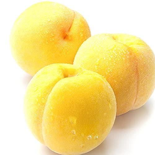 山形県産黄桃3kg(秀品/有袋栽培/約7玉-11玉)ギフトプレゼント敬老の日