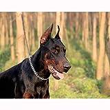 Collier pour chien chaîne Collier ras de cou en métal double anneau Twist chaîne...