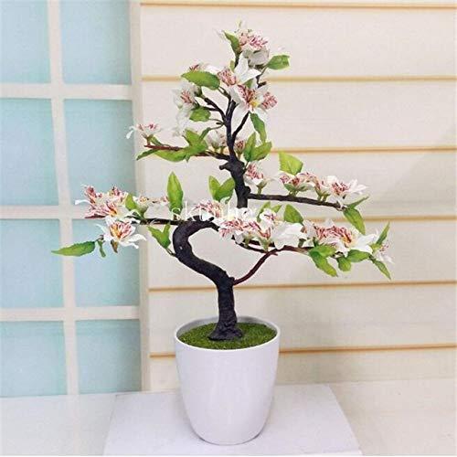 Agrobits Bonsai Tree Japanese Sakura Bonsai Bonsai Flower Cherry Blossoms For Home Garden 3pcs 4 Buy Online In Aruba At Aruba Desertcart Com Productid 121496646