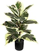 BESAME NATURE 60CM Artificial Rubber Tree Plant - Faux Ficus Tree Used for Home Office Decoration, Golden