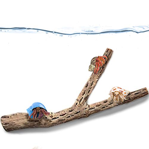 JOR Branchy Cholla Wood for Hermit Crabs, Beautiful Tank Décor, Climbing and Chewing Toy, Ideal Place for Hiding, Shedding and Resting, for DIY Projects and Gift Ideas, 1 Pc per Pack