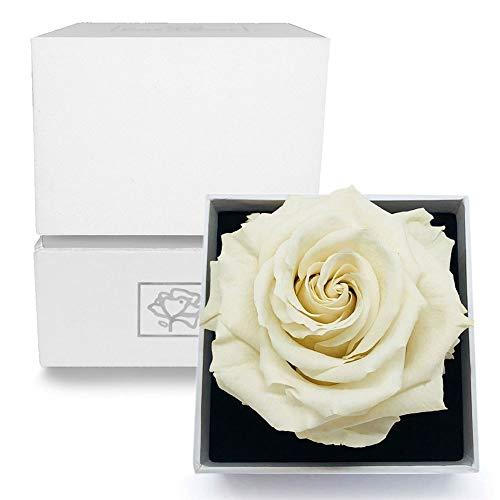 Bird-Rose Rosebox - Coffret Blanc et Argent avec Rose Eternelle/Rose Préservée/Rose Stabilisée XL (8.5 à 11 cm) - Blanche - Plusieurs Couleurs Disponibles