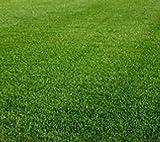 5 lb. Perennial Ryegrass Lawn Pasture Wildlife Grass Seeds