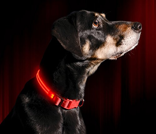 LED Dog Collar - USB Rechargeable - Available in 6 Colors & 6 Sizes - Makes...