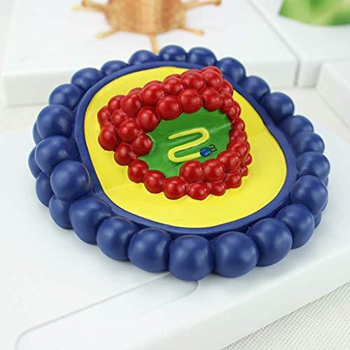 LXX Scientific Anatomisches menschliches Modell, mikrobiologisches Virus-Modell Baculovirus, Adenovirus, Phage Virus Learning Ressourcen Anatomie Modell für Bildungsstudien
