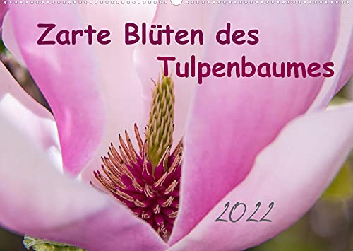 Zarte Blüten des Tulpenbaumes...