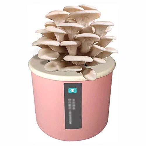 LXTIN Kit de Culture de Champignons Shiitake Bio, graines de Micro-Champignons d'intérieur bonsaï pour Planter des légumes, Sac de Spores...