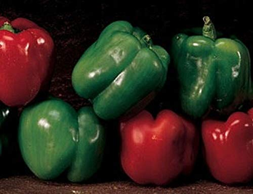 Heirloom Emerald Giant Sweet Bell Pepper 50 Seeds Non GMO OP Heavy Yields