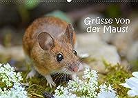 Gruesse von der Maus! (Wandkalender 2022 DIN A2 quer): Zauberhafte Bilder einer kleinen Maus! (Monatskalender, 14 Seiten )
