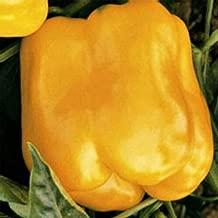 Golden Cal Wonder Sweet Pepper Seeds Vegetable Gardening Seeds (1 OZ)