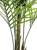 artplants.de Set 2 x Deko Großblatt Arecapalme, 165cm, wetterfest - Kunstpalme - Künstliche Areca Palme - 3