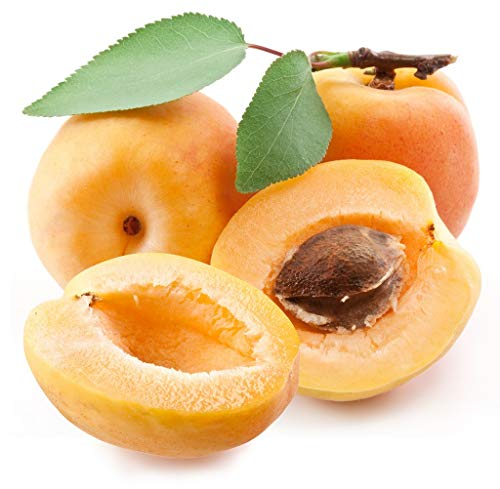Aprikose ANANAS Aprikosen Baum ca.200 cm, Marille Apricot