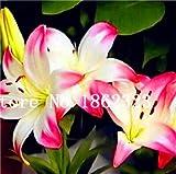 Semillas de flor genéricas frescas de 200 piezas Lilium Brownii para plantar rosa blanco