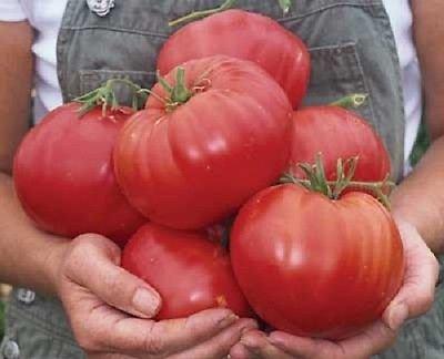Graines de tomate Mexique Big tomate 50 graines de semences Jardin