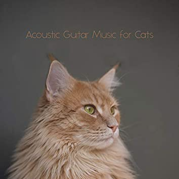 Acoustic Guitar Music for Cats