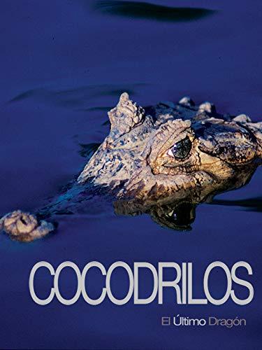 Cocodrilos, el último dragón