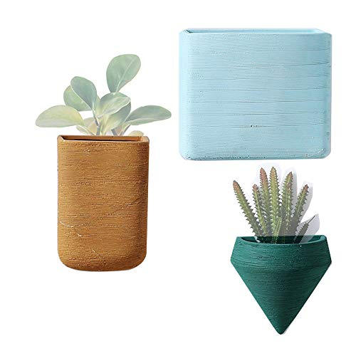 Colorful pots for succulents