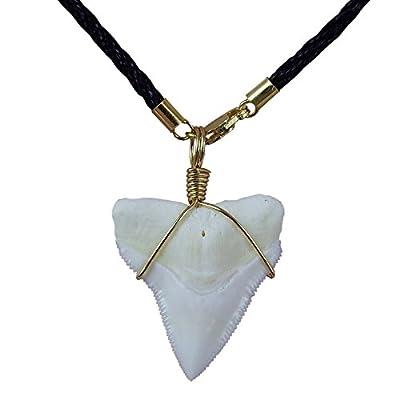 GemShark Real Bull Shark Tooth Necklace Gold 14 K Plating Black Cord Choker Pendant Double Best Friend