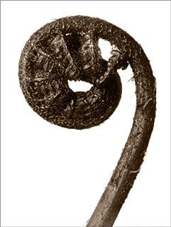 Posterlounge Lienzo 120 x 160 cm: Leaf of a Worm Fern de Karl Blossfeldt - Cuadro Terminado, Cuadro sobre Bastidor, lámina terminada sobre Lienzo auténtico, impresión en Lienzo