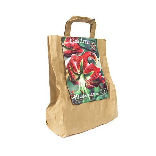 10 echte Lilienzwiebeln in verschiedenen Farben - Blumenzwiebeln in Geschenkverpackung - mehrjährig, winterharte Blumen Knollen Lilium Lilien - Hohe Qualität