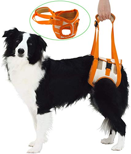 MESINURS Dog Rear Mobility Lift Support Harness - Pet Rehabilitation Walking Assistance Slings Straps Helps Dogs with Injuries Arthritis, Hind Legs Stand Up, Disability, M (14