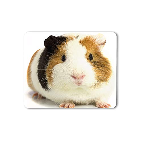 Moslion Guinea Pig Mouse Pad Three Color Staring White Background Animal Cute Lovely Adorable Gaming Mouse Mat Non-Slip Rubber Base Thick Mousepad for Laptop Computer PC 9.5x7.9 Inch