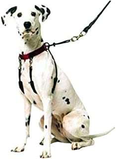 popular collars and harnesses for dogs