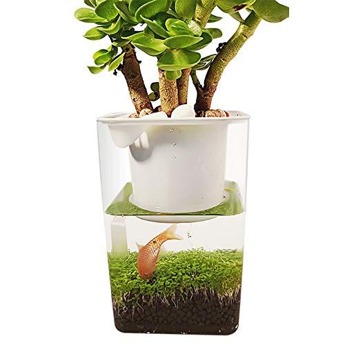 ZDJR Wassergarten, selbstreinigendes Aquarium, in dem Lebensmittel angebaut Werden, Mini-Aquaponic-Ökosystem