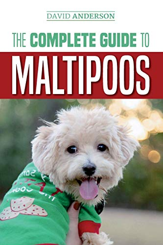 The Complete Guide to Maltipoos: Everything you...