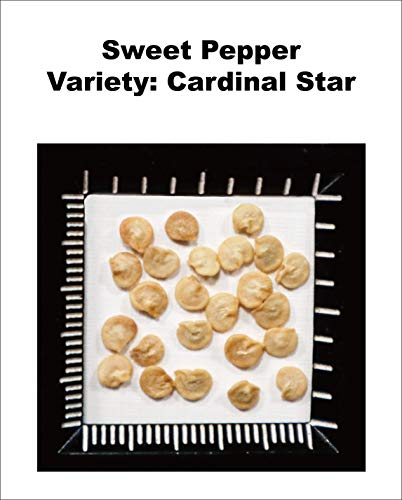 Non-GMO, Untreated Seeds, F1 Hybrid Sweet Pepper Seeds (Red Bell Pepper), Variety: Cardinal Star, Known-You Seed