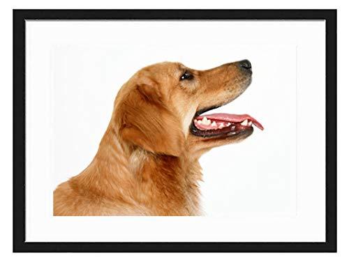 prz0vprz0v 12 x 15 inch zwart fotolijstje schattig goud hond decoratieve kunst prints en opknoping sjabloon, moderne fotolijst