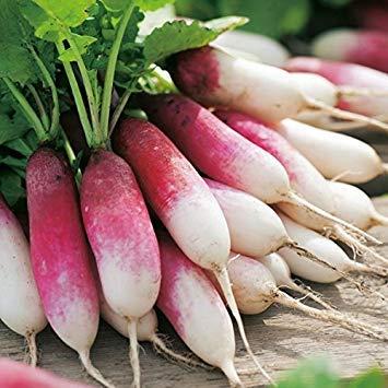 Shop Meeko Kings Seeds - Radis 18 jour - 750 graines