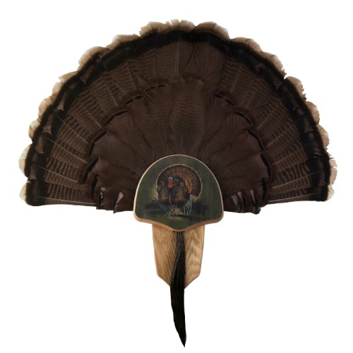 Walnut Hollow Country Turkey Fan Mount & Display Kit, Oak with Drumsticks Image