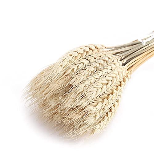 Bouquet de bouquet séché naturel 50pcs / fleurs naturelles de blé artificiel oreilles de blé artificielles bouquet de grains de fleur pour la décoration de fête de mariage Couronne de fleur Non soumis