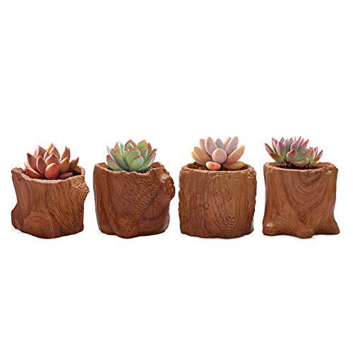 T4U Ceramica Cerámicos Planta Maceta Conjunto de 4, Maceta de Imitación de Grano de Madera con Drenaje, Contenedor de Bonsai de Cactus de Hierbas de Porcelana Marrón para Decoración de Hogar y Oficina