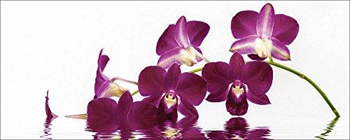 Artland Qualitätsbilder I Glasbilder Deko Glas Bilder 125 x 50 cm Botanik Blumen Orchidee Foto Lila A7QQ