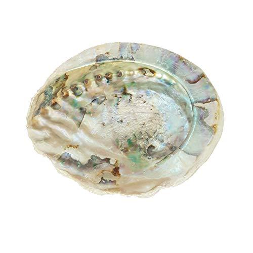 Abalone Shell Large 14-17cm Naturally Beautiful