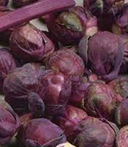 CUSHY Vegetable Seeds Cavolo Cavoletto di Bruxelles Rosella agricoltura biologica Heirloom