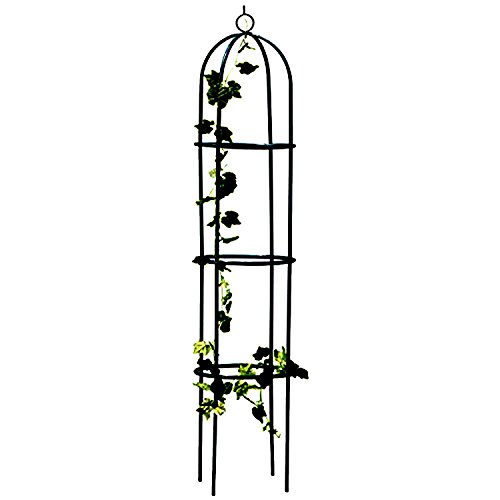 Gr8 Garden Steel Obelisk Outdoor Rose Tree Climbing Plant Frame Stand Growth Support Trellis Arch