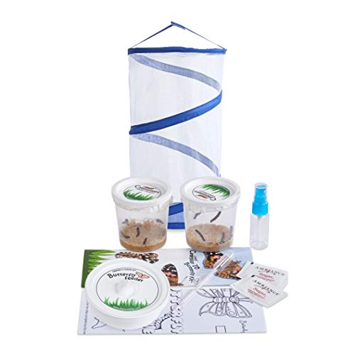Nature Gift Store Live Butterfly Kit: Shipped with 10 Painted Lady...