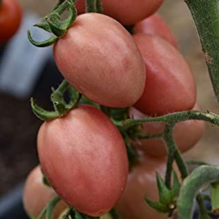 50 Seeds Thai Pink Pear Tomato Seeds
