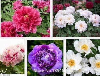 Mehrfarbig: Verkauf von Blumensamen...